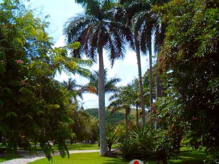 The orchid garden of soroa and waterfall pinar del rio for Jardines de orquideas