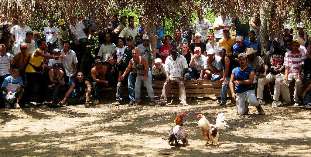 Pelea-de-gallos-en-Vinales-Cuba.jpg